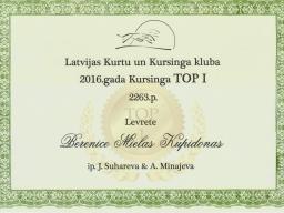 Italian greyhound Berenice Mielas Kupidonas - 1 place in Lure Coursing TOP-2016 by Latvian Sighthound club